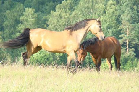 <strong>Bellen häst och ponny</strong>